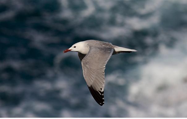 La buena convivencia de los cruceros con un ave que pudo desaparecer